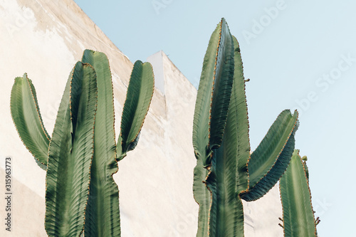 Cactus plant. Creative, minimal, styled concept for bloggers. Canvas Print