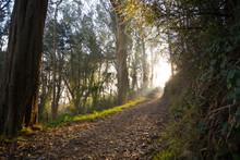 The Fog And Rays Of Sunshine I...