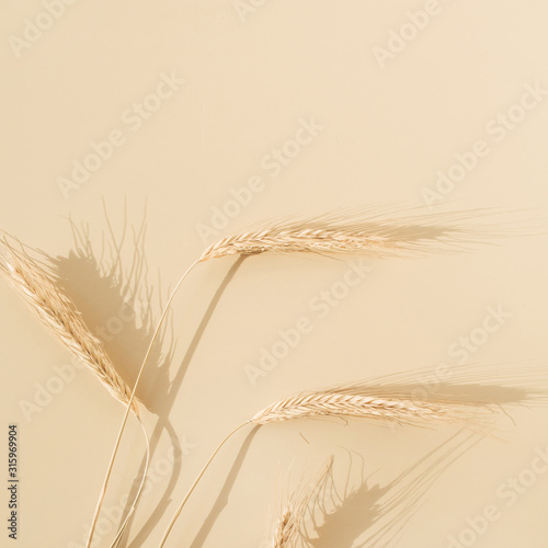 Fototapeta Ears of rye, wheat on pastel beige background. Flat lay, top view minimal organic healthy raw food concept. obraz