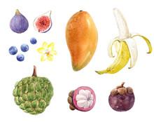 Watercolor Fruit Collection Mango, Banana, Fig, Mangosteen, Blueberry, Vanilla Flower And Sugar Apple. Stock Illustration.