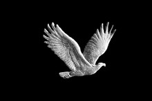 Eagle From Standing Liberty Qu...