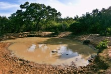 Small Pond In National Park