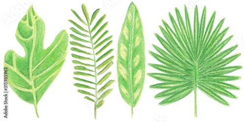 Set of watercolor tropic leaves for decoration