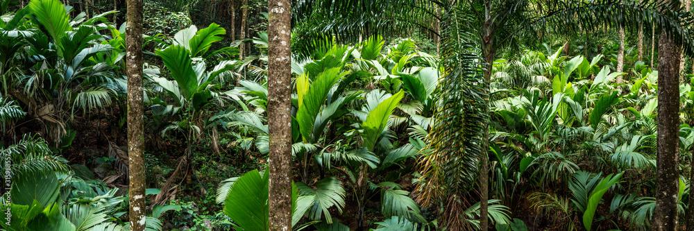 Fototapeta Tropical rain forest panorama