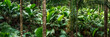 canvas print picture - Tropical rain forest panorama