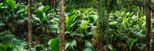 Tropical Rain Forest Panorama