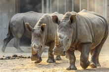 Dangerous African Animals Clos...