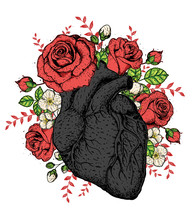 Heart And Rose Flower Hand Drawn. Vintage Vector Illustration. Anatomical Heart. Isolated Colorful Heart Illustration.