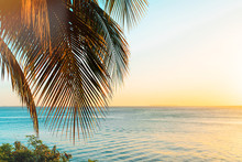 Coconut Palm Trees On Beach At...