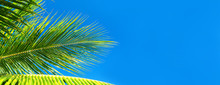 Coconut Palm Trees Beautiful T...