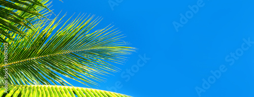 Coconut palm trees beautiful tropical background. Summer concept.