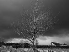 Tree In England Winter