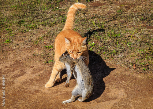 Photo Cat Adopts Rabbit