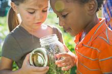 Kids Looking At Bugs In Jar
