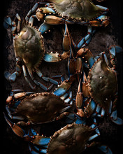 Fresh Maryland Blue Crabs