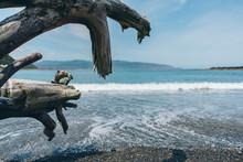 Dead Wood On The Beach; Dead T...
