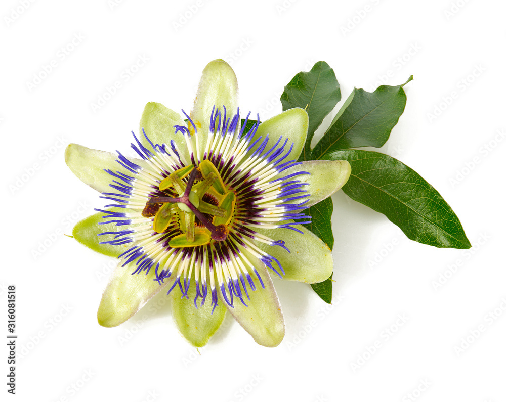 Fototapeta passion flower isolated on white background