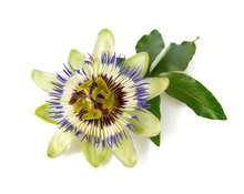 Passion Flower Isolated On Whi...