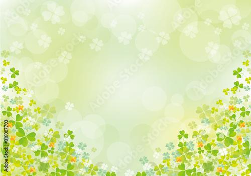 クローバー:春 クローバー 四つ葉 早春 土手 自然 4月 群生 満開 四つ葉のクローバー