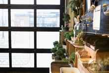 Bonsai And Terrarium Plants On Display In Plant Shop