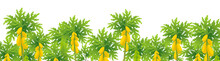 Papaya Tree. Papaw Plantation Plant. Large Yellow Papaya Fruits On A Tree. Vector Illustration.