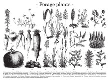 Forage Plants Collection / Vin...