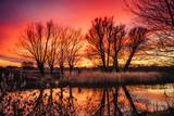 czerwony ognisty zachód słońca i drzewa bez liści