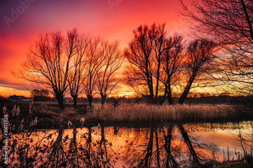 Obraz czerwony ognisty zachód słońca i drzewa bez liści - fototapety do salonu
