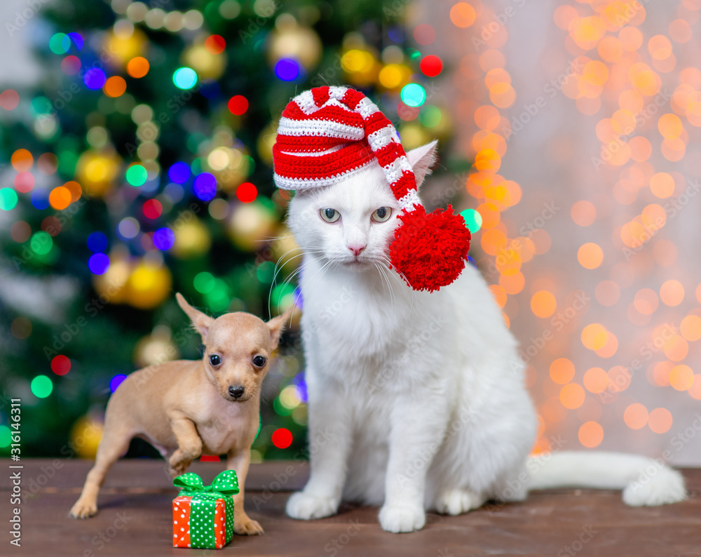 Fototapeta Adult angora cat wearing a red santa hat sits with tiny toy terrier puppy with Christmas tree on background