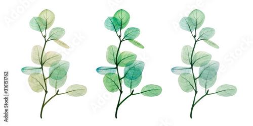Fototapeta  Watercolor eucalyptus leaf set. Floristic design elements for floristics. Hand drawn illustration. Greeting card. Floral print. Plant painted background. For postcards, greetings, cards, logo.  obraz na płótnie