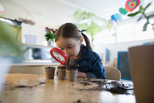 Curious Preschool Girl Student With Magnifying Glass Examining Growing Seedling Plants