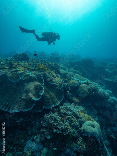 Underwater photo of a coral reef with a scuba diver swimming in blue ocean Canvas Print