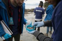 Eco-friendly Male Scientists Gathering Micro Plastic Specimens On Beach