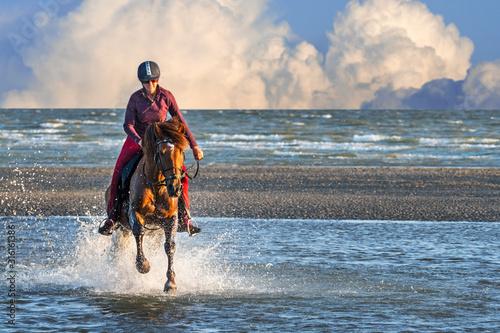 Fotografie, Obraz Female horse rider on horseback galloping in sea