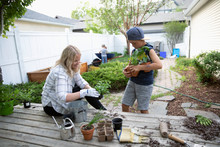 Mother And Son Potting Plants ...
