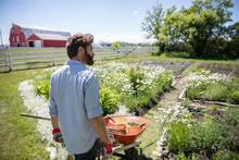 Man With Wheelbarrow Gardening...