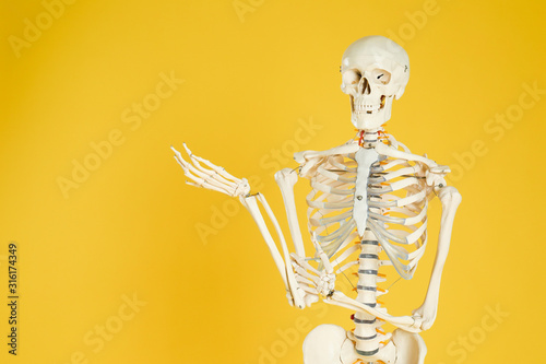 Photo Artificial human skeleton model on yellow background