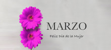 """Two Purple Gerbera Flowers And """"March. Happy Women's Day"""" Text In English"""