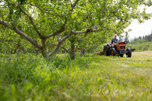 Male Farmer Driving Tractor In Orchard
