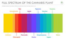 Full Spectrum Of The Cannabis ...