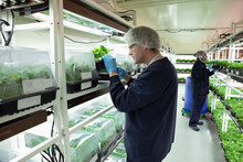 Grower Inspecting Cannabis See...