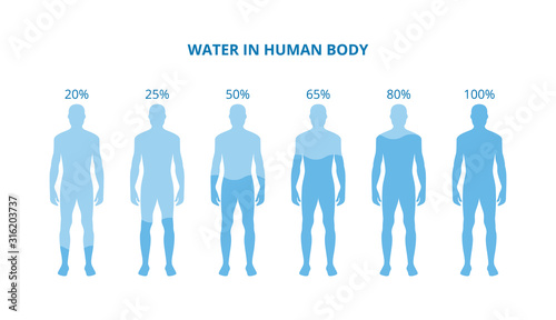 Obraz Water in human body - health poster with differently hydrated bodies - fototapety do salonu