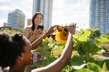 Playful Young Women Friends Putting Sunglasses On Sunflower In Sunny, Urban Community Garden