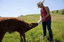 Woman Bottle Feeding Calf In Field