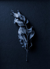 Blue toned dry leaf on dark blue background. Still life