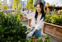 Happy Young Woman Harvesting Fresh Carrots In Urban Community Garden