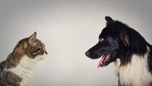 The Eternal Duel Between Dog A...