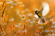beautiful little bird yellow tit flies over a field of white Daisy flowers in Sunny summer evening with feathers and wings spread wide