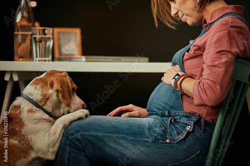 Fotografie, Obraz Smiling charming caucasian pregnant woman sitting at home office, touching belly and looking at her beloved dog