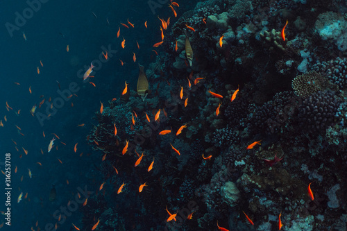 beautiful coral reef under water in the ocean of egypt, underwater photography in egypt